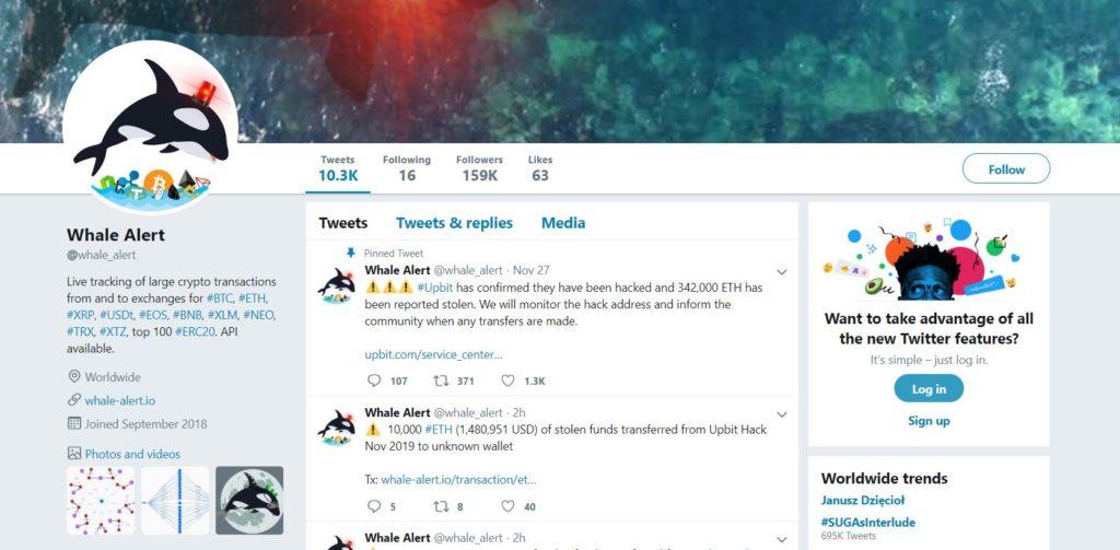 whale alert twitter head