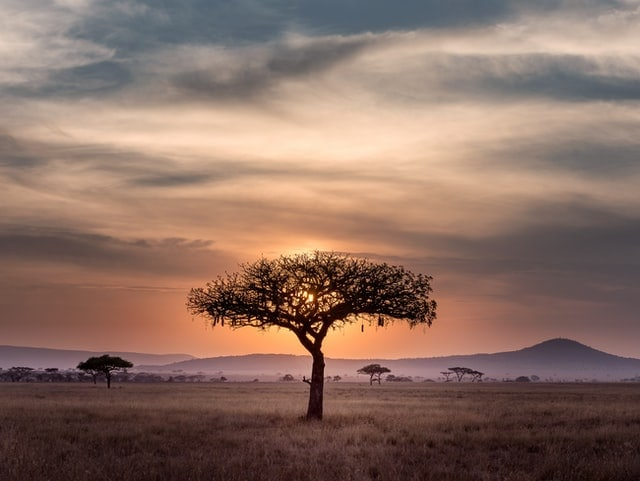 Africa is one of the most interested country in crypto